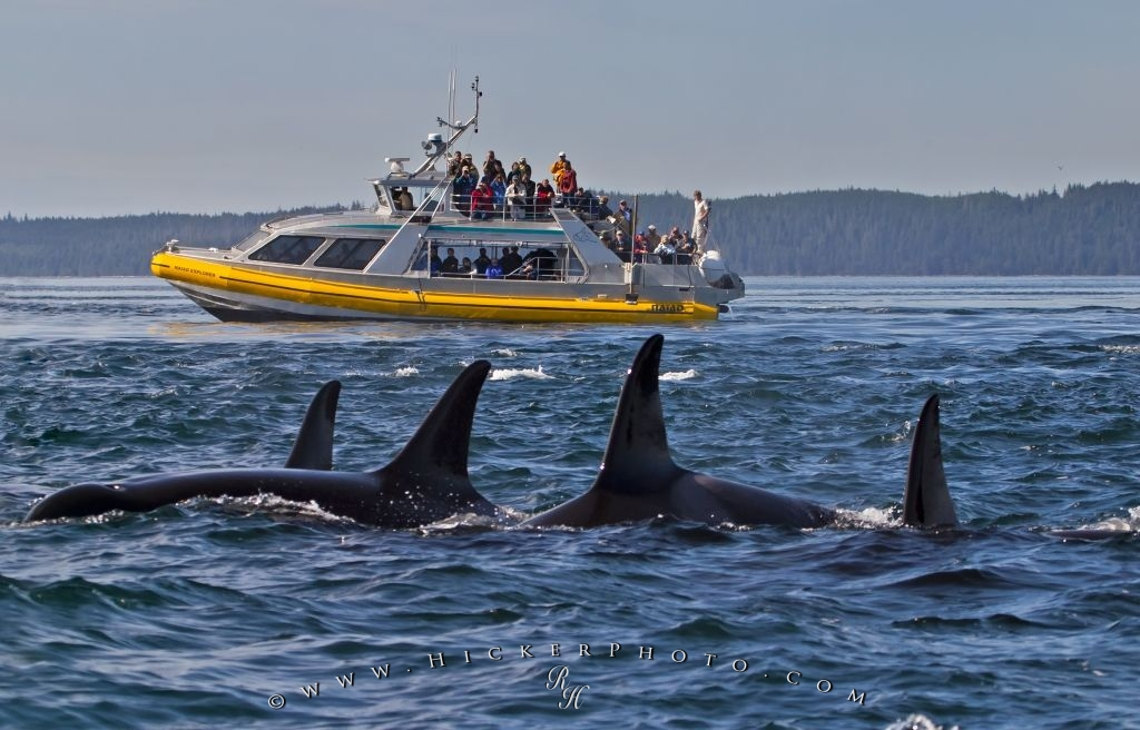 Naiad Explorer Whale Watching Tour Boat
