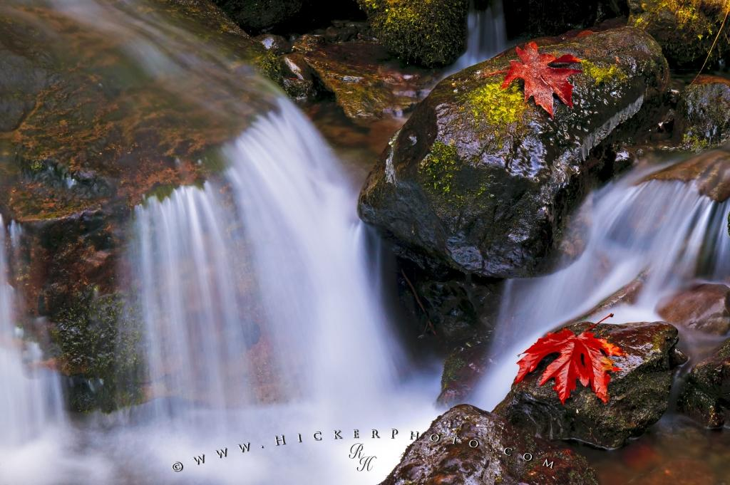 Beautiful Fall Leaves Cascading Flowing Water