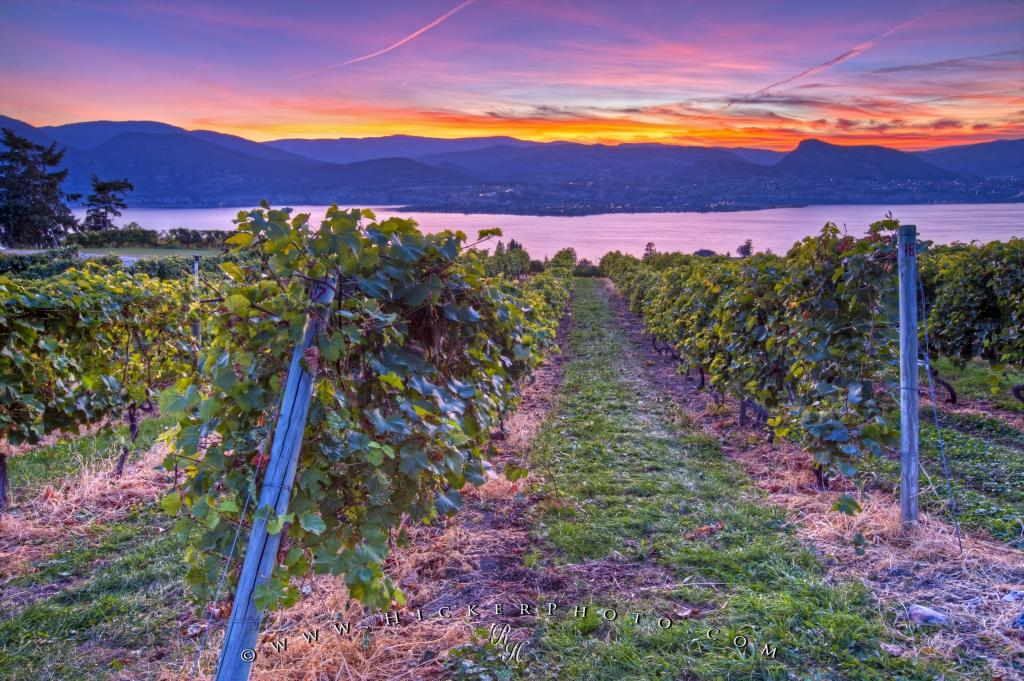 Fall Sunset Vineyard Lake Scenery Okanagan