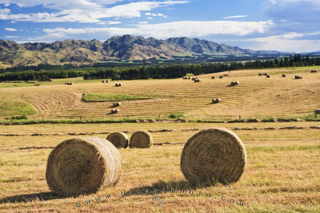 Farmland Paddock Hay Bales Picture New Zealand
