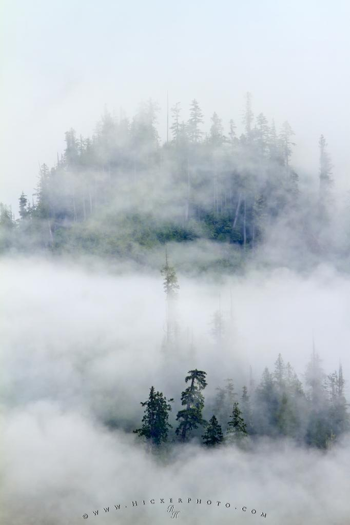 Fog Mist Great Bear Rainforest British Columbia