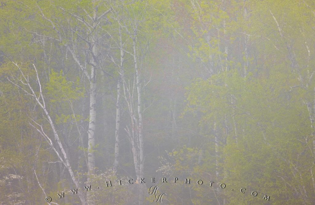 Nature Foggy Spring Forest Lake Superior Ontario