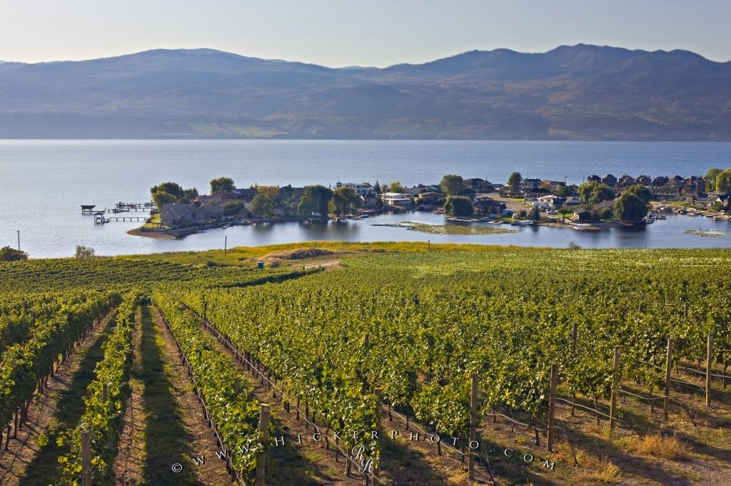 Grapevines Scenic Okanagan Lake View