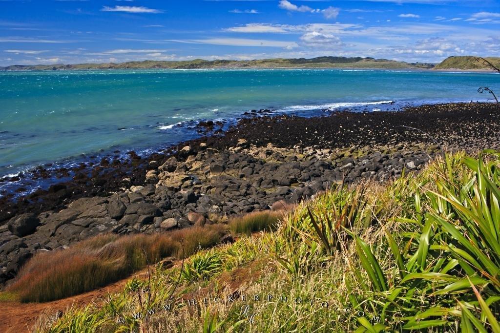 Manu Bay North Island New Zealand
