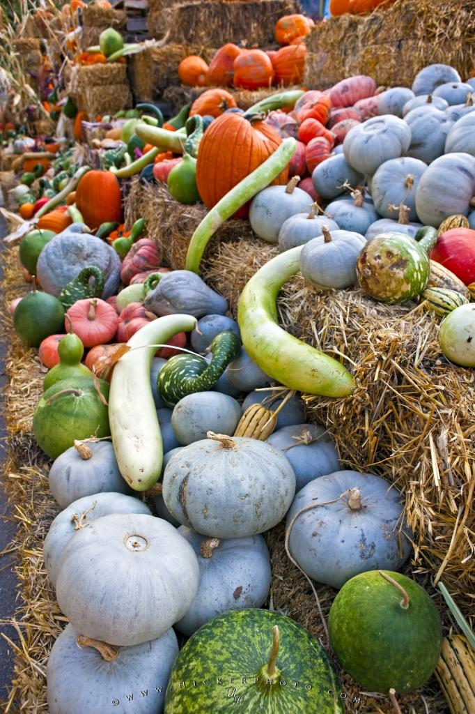 Pumpkins Squashes Marrows Vegetable Fall Season Display