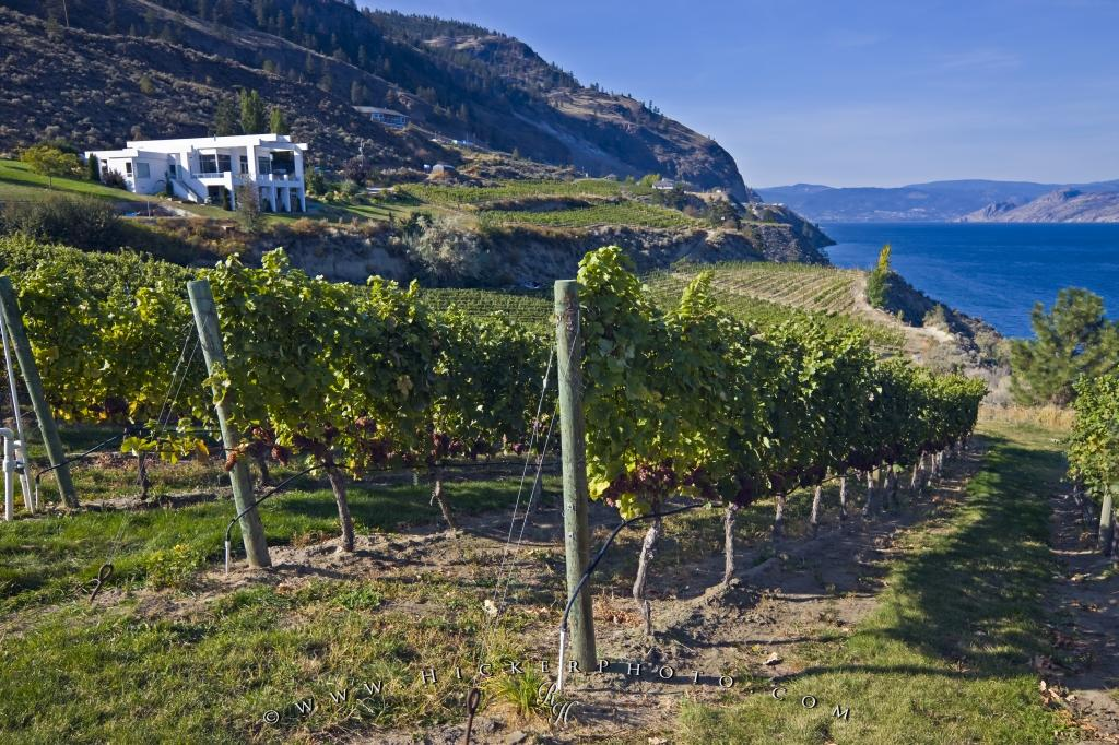 Scenic Winery Picture Summerland Okanagan Lake
