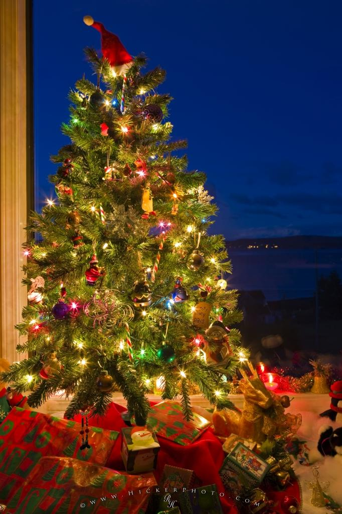 pictures of christmas trees | beautiful photos