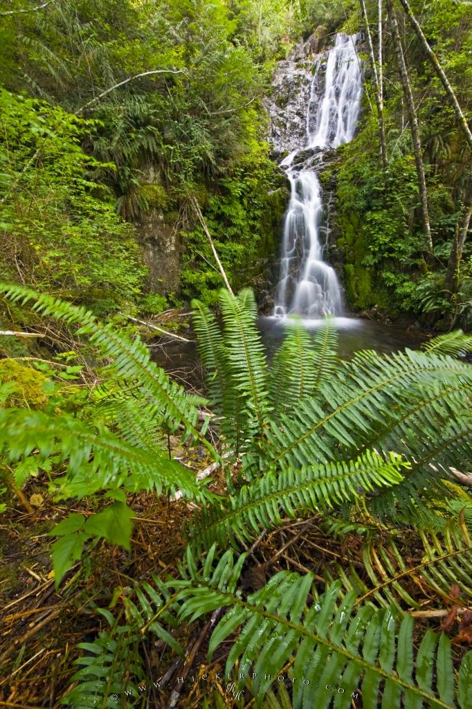 Waterfall Native Temperate Rain Forest Picture
