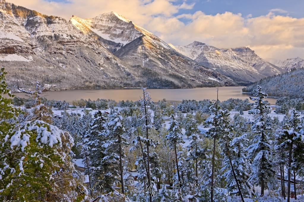 Waterton Glacier International Peace Park Fresh Snow Forest