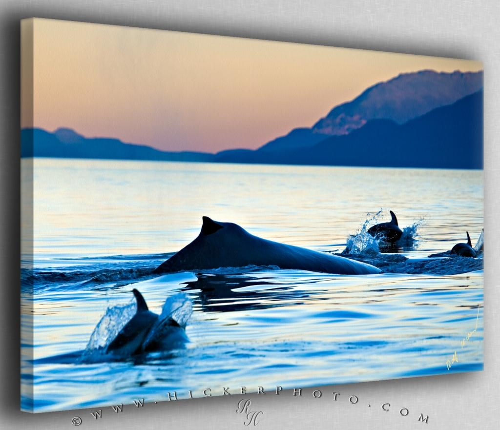 Humpback Whale and Dolphins Canvas Fine Art Photo