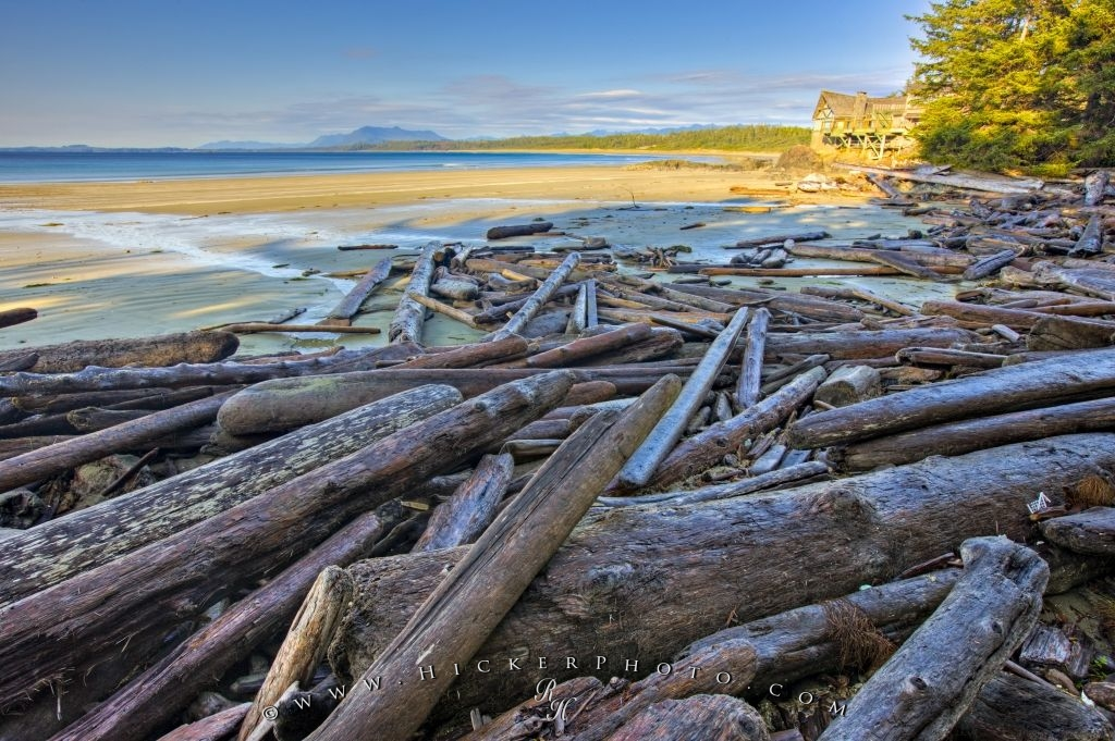 Wickaninnish Beach Driftwood Picture