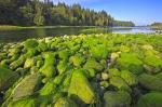 The Nimpkish River is a major waterway on Northern Vancouver Island. Rocks along the river banks are cloaked in green algae, adding a splash of colour to the landscape.