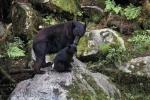 photo of Black Bears