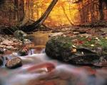 photo of Autumn Pictures