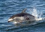 photo of Dolphins Pictures