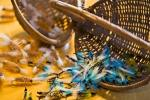 photo of Fly Fishing Flies Picture