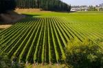 photo of Mission Estate Vineyards New Zealand