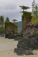 Sea stacks line the beach in San Josef Bay in Cape Scott Provincial Park, Northern Vancouver Island, British Columbia, Canada.