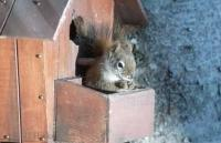 Stock Photo of a squirrel sitting inside the feeder