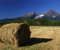 Hay bales in foreground of hudson bay montain near smithers