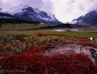 A wonderful all season vacation destination in the Jasper National Park is the Icefield Parkway in Alberta, Canada.