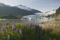 Juneau is a great Alaska Family Vacation Point along with other attractions in the inside passage