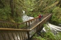 Lunch Creek is situated in a beautiful forest in Settlers Cove near Ketchikan in Alaska, USA.