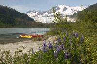 A beautiful vista of snowcapped mountains, a glacier fed lake and pretty spring lupins are some of the sights seen during kayaking on the lake.