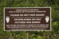 bear sign