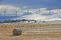 Early winter has settled in southern Alberta, Canada where hay bales are covered in snow and windmills produce alternative energy.
