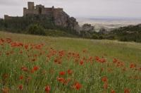 The ancient Loarre Castle and a field of poppies in the province of Huesca, Aragon in Spain, Europe.