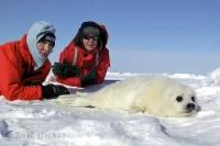 In a bid to rescue this animal from the seal hunt, Heather and Paul McCartney visited the harp seals on the ice floes in Canada.
