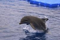 Aquarium Bottlenose Dolphin Valencia Spain