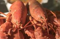 A valuable seafood export in Canada are Atlantic Lobsters from Eastern Canada's Atlantic Provinces.