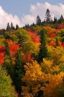 A natural work of art which is produced in the Autumn and adorns the hillsides along Highway 2 in Mont Tremblant Provincial Park in Quebec, Canada.