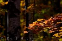 Autumn Beauty Picture Algonquin Provincial Park