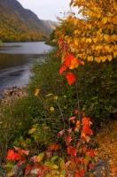 A beautiful autumn scene unfolds along the banks of the Jacques Cartier River in the Jacques Cartier Provincial Park in the province of Quebec, Canada a popular year round destination for Quebecer's and tourists alike.