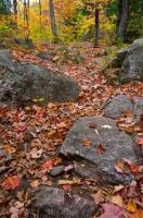 Autumn Scenery Ragged Falls Trail Ontario Canada