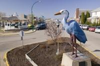 This statue of a blue heron is in the main street of Barrhead in Alberta, Canada.