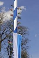 The raising of the Maibaum is completed with attaching signs as a symbol of the businesses in the town of Putzbrunn, Germany.