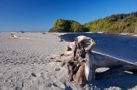 Driftwood is a common sight along the beach at Ship Creek on the South Island of New Zealand and many pieces have been here for years.