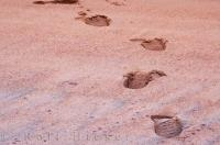 Red Sand Beach Footprint Picture
