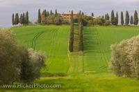 An old villa compliments the beautiful Tuscan landscape which surrounds it, with rows of Cypress Trees and lush green fields in the Province of Siena, in the Tuscany Region of Italy.