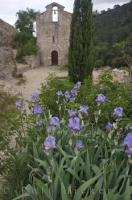 The lovely blue iris flowers standing within the grounds of the Chapel of Saint Roch in the little village of Les Mees in the Alpes de Haute in Provence, France.
