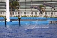 Each Bottlenose Dolphin at the L'Oceanografic in Valencia, Spain performs high leaps where they reach great heights out of the water.