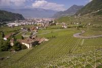 The interesting town of Bozen in the South Tyrol region of Italy with the fertile vineyards in the foreground.