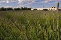 The Saint Benezet Bridge on the Rhone River in Avignon, Provence in France has an aromatic lavender field making up the landscape in the forefront.