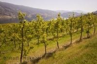 The Okanagan is a beauiful travel destination in British Columbia.