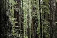 One of the most impressive state parks in California is the Humboldt Redwoods State Park with the Avenue of the Giants.