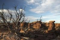Canyonlands Photos